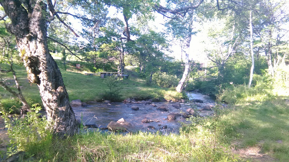 夏は山の木漏れ日と水辺に癒されます